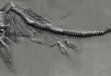 Fischsaurier_fg01.jpg