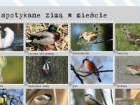 dokarmianie-ptaków-akcja-.jpg